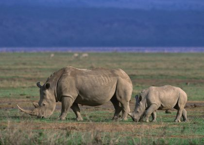 Germany, Tanzania's leading partner in tourism and wildlife conservation