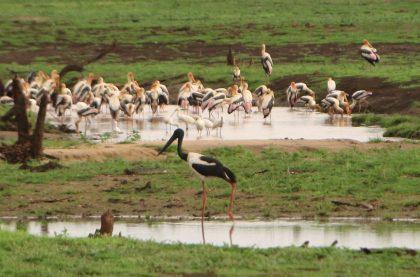 Rare sighting in Uda Walawe National Park