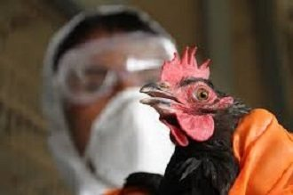 Hong Kong announces first human bird flu casualty in current winter season