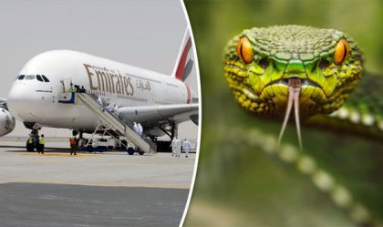 Snake on plane cancels Emirates flight from Muscat to Dubai