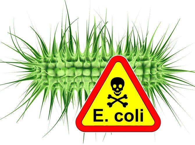 Canada: Outbreak of E. coli infections under investigation