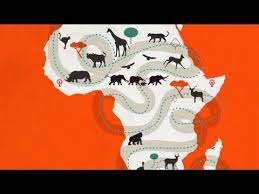 Beyond the China Ivory Ban
