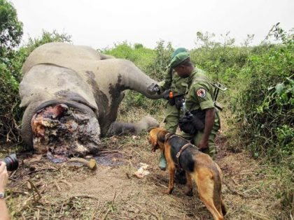 Ban on Ivory trade by China clearly not enough