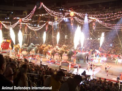 America's largest animal circus closes after 146 years