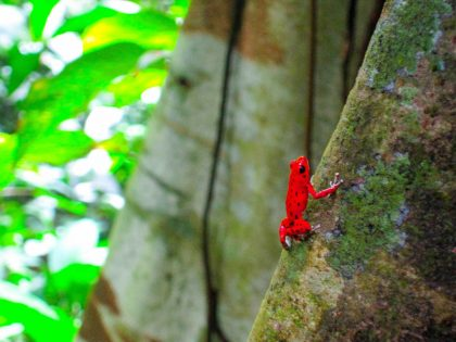 Red Frog Beach Island Resort certified for its sustainability in Panama