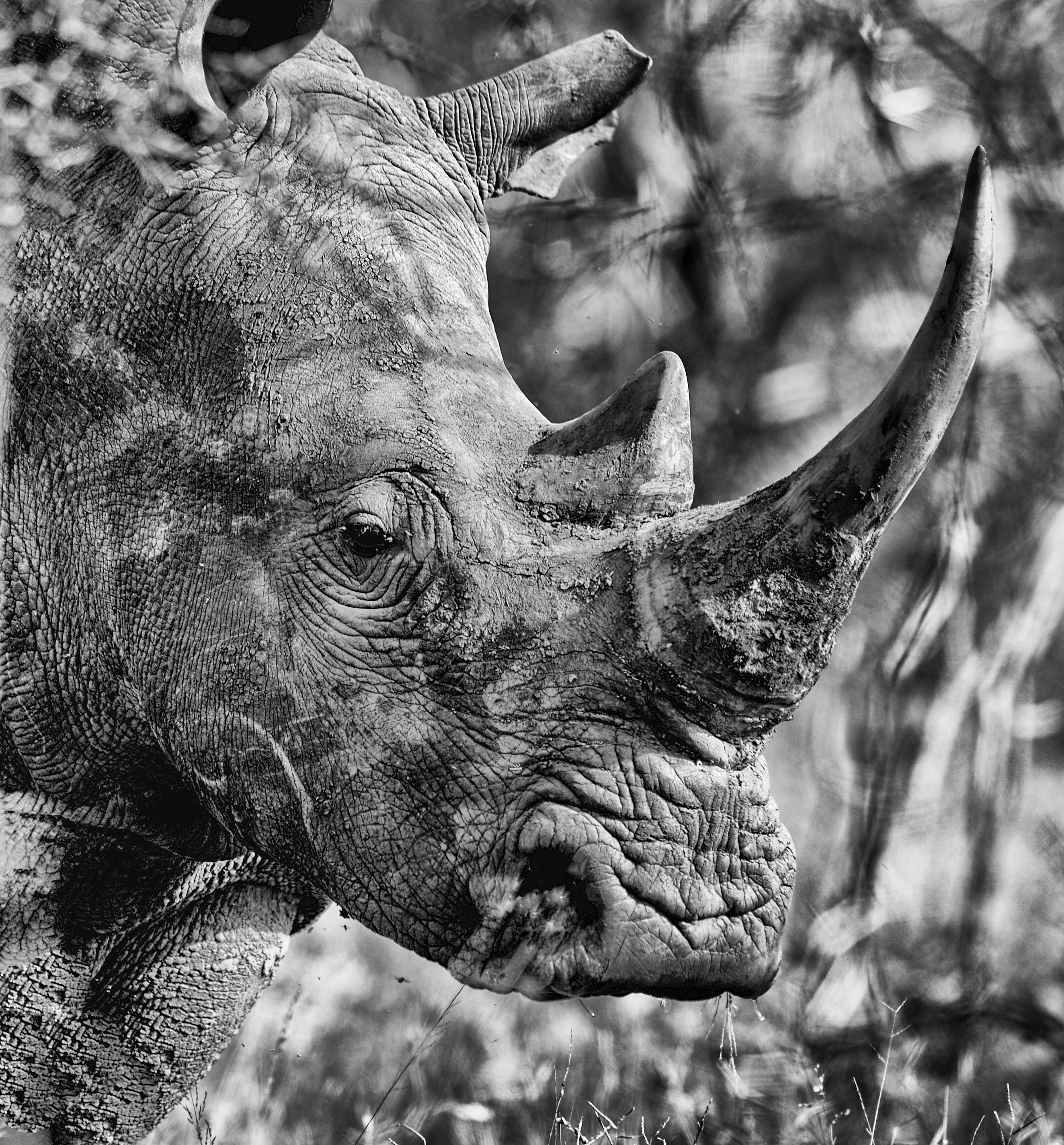 South Africa's Environmental Minister Edna Molewa: Plan to sell rhino horn and wildlife