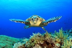 """Former Seychelles President addresses """"Sustainable Oceans in a Changing Climate"""""""