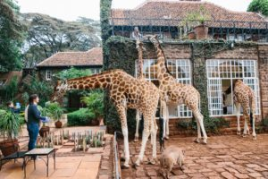 Africa's hospitality industry rises