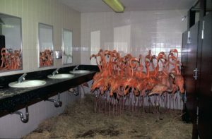 World Animal Protection: Flamingos in bathrooms and more options to help animals during a Hurricane