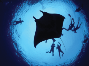 Belize to create world's first ray sanctuary