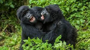 Rwanda, best African destination for Sustainable Tourism goals.