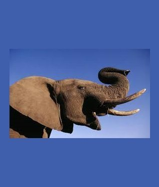 US Imports of elephant trophies from Zimbabwe and Zambia