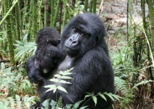 Rwanda targets Far East tourist market