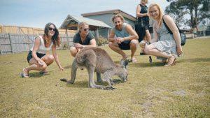 Kangaroo Group Shot at Phillip Island