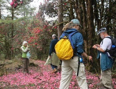 Bhutan's Rhododendron Festival celebrates the blossoms at Royal Botanical Park