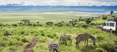 Tanzania tour operators to sue Ngorongoro Conservation Area Authority for defamation
