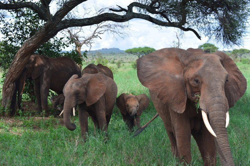 Community-based wildlife conservation paves way for ecological success in Tanzania