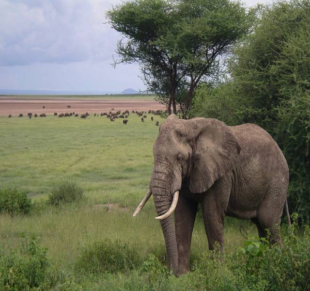 Community-based wildlife conservation paves a way for Ecological success in Tanzania