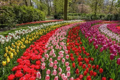 Keukenhof is open and Romance in Flowers is the theme