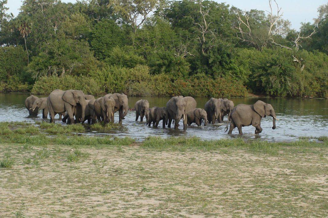 Tanzania Tourism set to take wildlife protection through paramilitary training