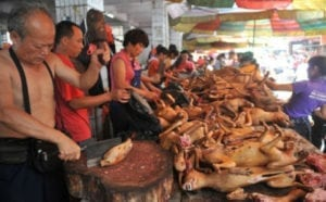Boycott travel to China if you love dogs