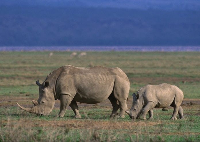 Ngorongoro Conservation and Tanzania tourist parks remit dividends to Tanzanian government