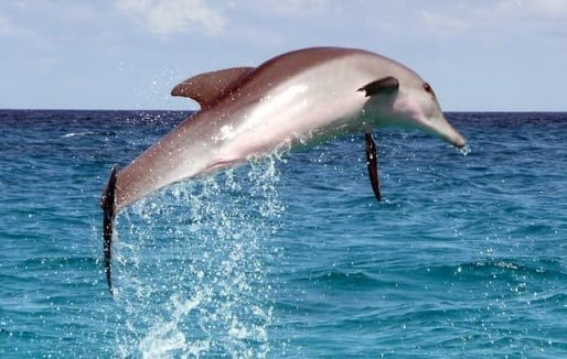 Port Canaveral launches program to protect wild dolphins in Port waters