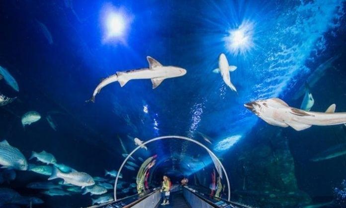 Dr. Jill Biden to Keynote San Francisco Climate & Ocean Conservation Museum initiative
