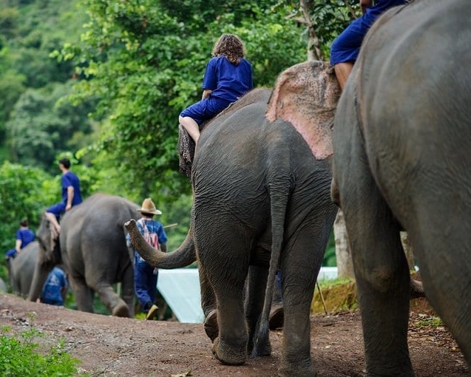 Canadian tourist's leg crushed by elephant in Thailand