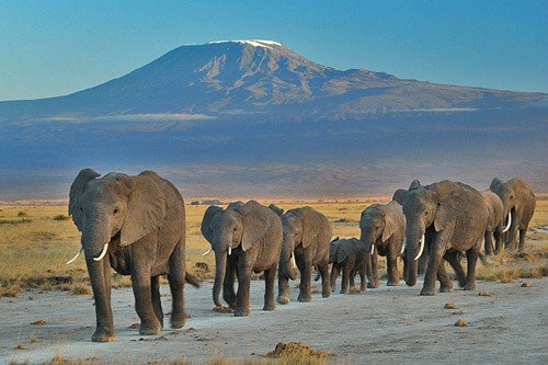 Elephants are dual nationals in Kenya and Tanzania!