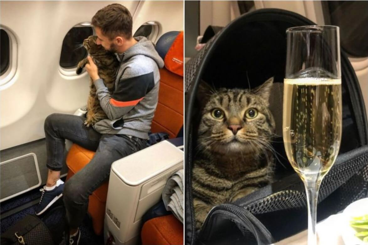 Kremlin: No comment on Aeroflot 'fat cat' incident