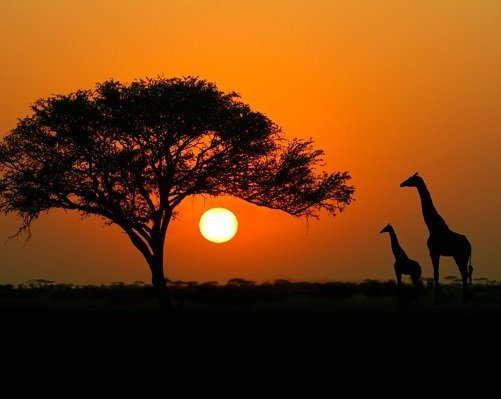 East African Community suffers massive tourism and job loss