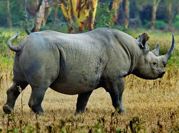 Rhino Tourism introduced in Tanzania Mkomazi Park