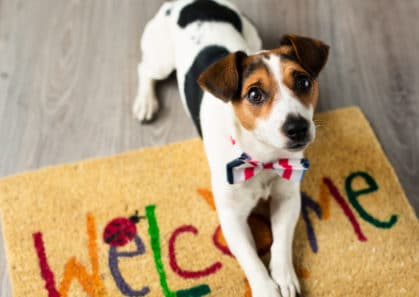 Hawaii worst state in the US for pet-friendly accommodations